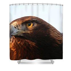 Golden Eagle 5151803 Shower Curtain