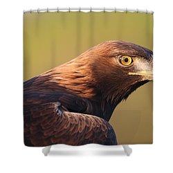 Golden Eagle 5151806 Shower Curtain