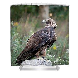 Golden Eagle On Rock 92515 Shower Curtain