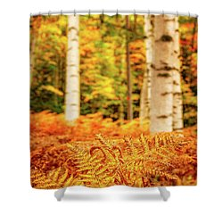 Golden Ferns In The Birch Glade Shower Curtain