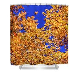 Golden Oaks Shower Curtain