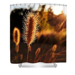 Golden Wildgrass Shower Curtain