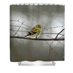 Goldfinch In Winter Looking At You Shower Curtain