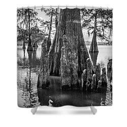Grand Lake Cypress Shower Curtain