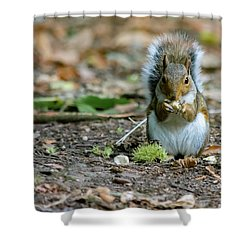 Shower Curtain featuring the photograph Gray Squirrel Stood Upright Eating A Nut by Scott Lyons