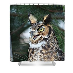 Great Horned Owl 5151801 Shower Curtain