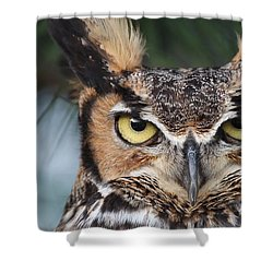 Great Horned Owl Eyes 51518 Shower Curtain