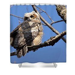 Great Horned Owlet 42915 Shower Curtain