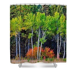 Green Aspens Red Bushes Shower Curtain