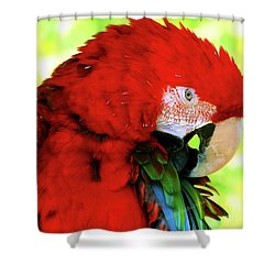 Shower Curtain featuring the photograph Green-winged Macaw by Debbie Stahre