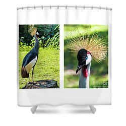 Grey Crowned Crane Gulf Shores Al Collage 8 Diptych Shower Curtain