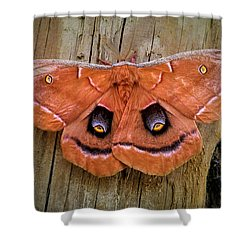 Halloween Moth Shower Curtain