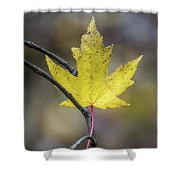 Shower Curtain featuring the photograph Hanging Out by Michael Arend