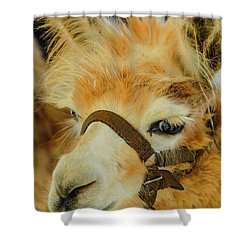 Happy Alpaca Shower Curtain