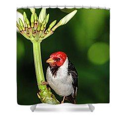 Happy Valentine's Day Bird Shower Curtain