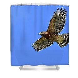 Hawk On The Go Shower Curtain