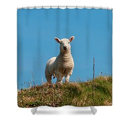 Hebridean Lamb Shower Curtain