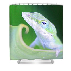 Hello, Anole. 2 Shower Curtain