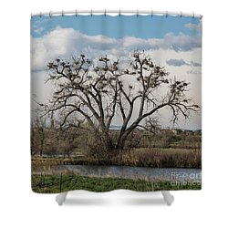 Shower Curtain featuring the photograph Heronry by Jon Burch Photography