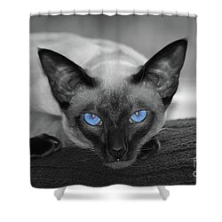 Hey There Blue Eyes - Siamese Cat Shower Curtain