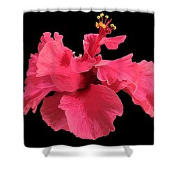 Hibiscus Pink In Black Shower Curtain