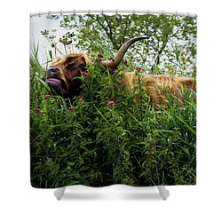 Shower Curtain featuring the photograph Highland Cow In Tall Grass by Scott Lyons