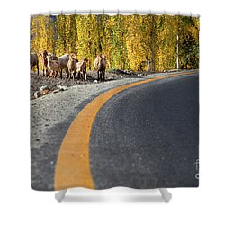 Highway Story Shower Curtain