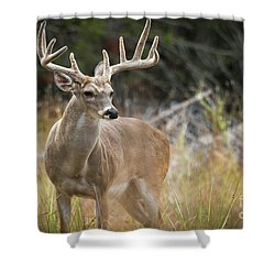 Hill Country Whitetail Shower Curtain