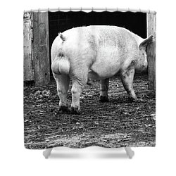 hog Shower Curtain