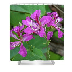 Shower Curtain featuring the photograph Hong Kong Orchid Tree Dthn0262 by Gerry Gantt