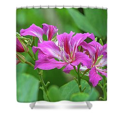 Shower Curtain featuring the photograph Hong Kong Orchid Tree Dthn0263 by Gerry Gantt