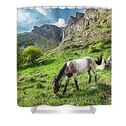 Horse On Balkan Mountain Shower Curtain
