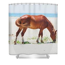 Horse On Beach Shower Curtain