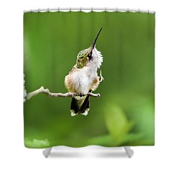 Hummingbird Flexibility Shower Curtain
