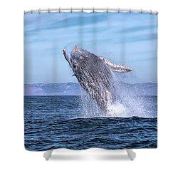 Humpback Breaching - 02 Shower Curtain