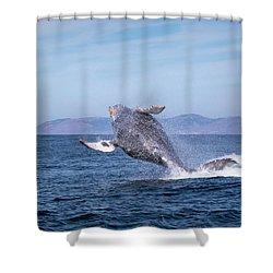 Humpback Breaching - 03 Shower Curtain