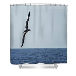 Immature Masked Booby, No. 5 Sq Shower Curtain
