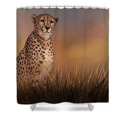 In The Brush Shower Curtain