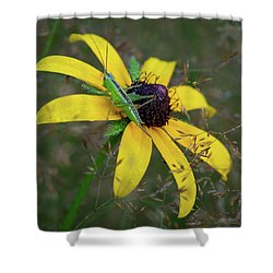 Shower Curtain featuring the photograph In The Meadow by Dale Kincaid