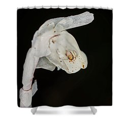 Indian Pipe Rabbit Head Shower Curtain