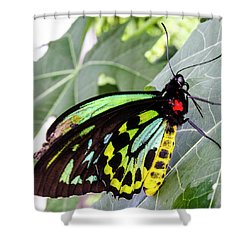 Insect Kaleidescope Shower Curtain