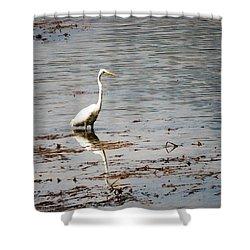 Intermediate Egret At Lake Pat 3 Shower Curtain