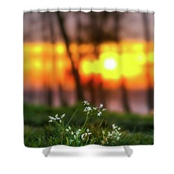 Into Dreams Shower Curtain