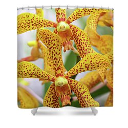 Intriguing Yellow Spider Orchids Shower Curtain