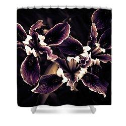 Irresistible Iris Shower Curtain