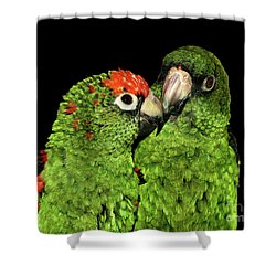 Shower Curtain featuring the photograph Jardine's Parrots by Debbie Stahre