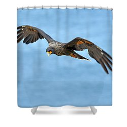 Johnny Shower Curtain