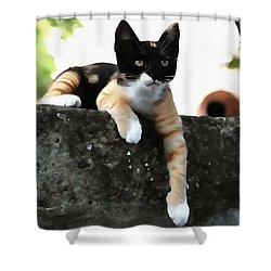 Just Chillin Tricolor Cat Shower Curtain