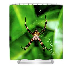 Just Hanging Shower Curtain
