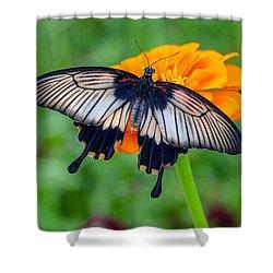 Kite Swallowtail  Shower Curtain